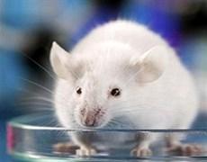 وبینار روشهای جایگزین آزمایشات حیوانی
