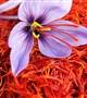 زعفران چه خواص دارویی دارد؟