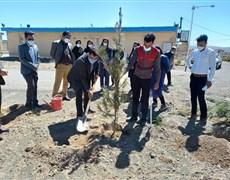 کاشت نهال درخت در محوطه بیمارستان خاتم الانبیاء